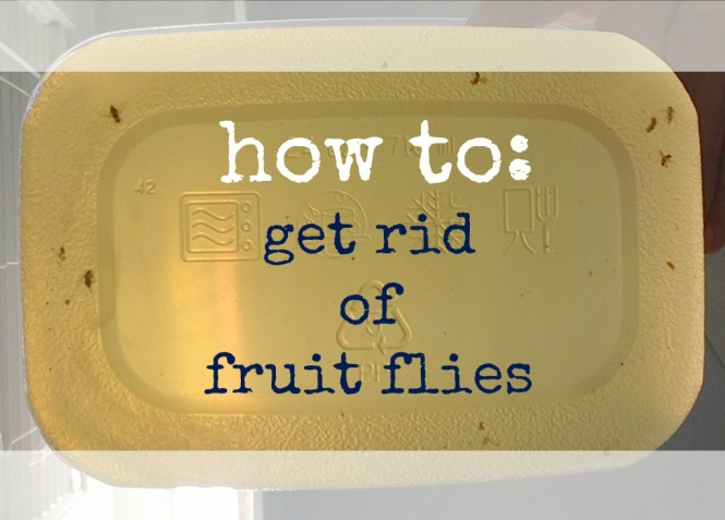 fruit flies 3
